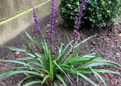 garden-planting-maintenance-Charvil-Wargrave-Twyford-RG10