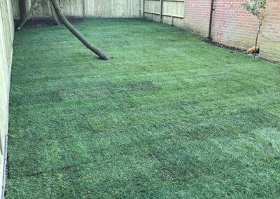 lawn-care-Newbury-turfing-Windsor
